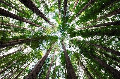 Geef om de bossen, kies voor FSC®!